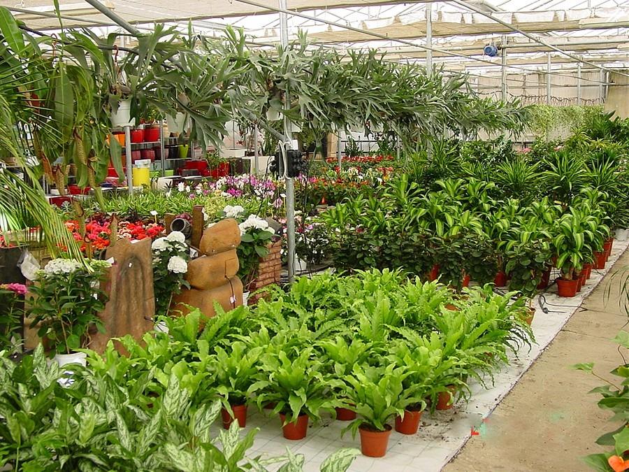 Plants indoor garden center for Indoor gardening for seniors