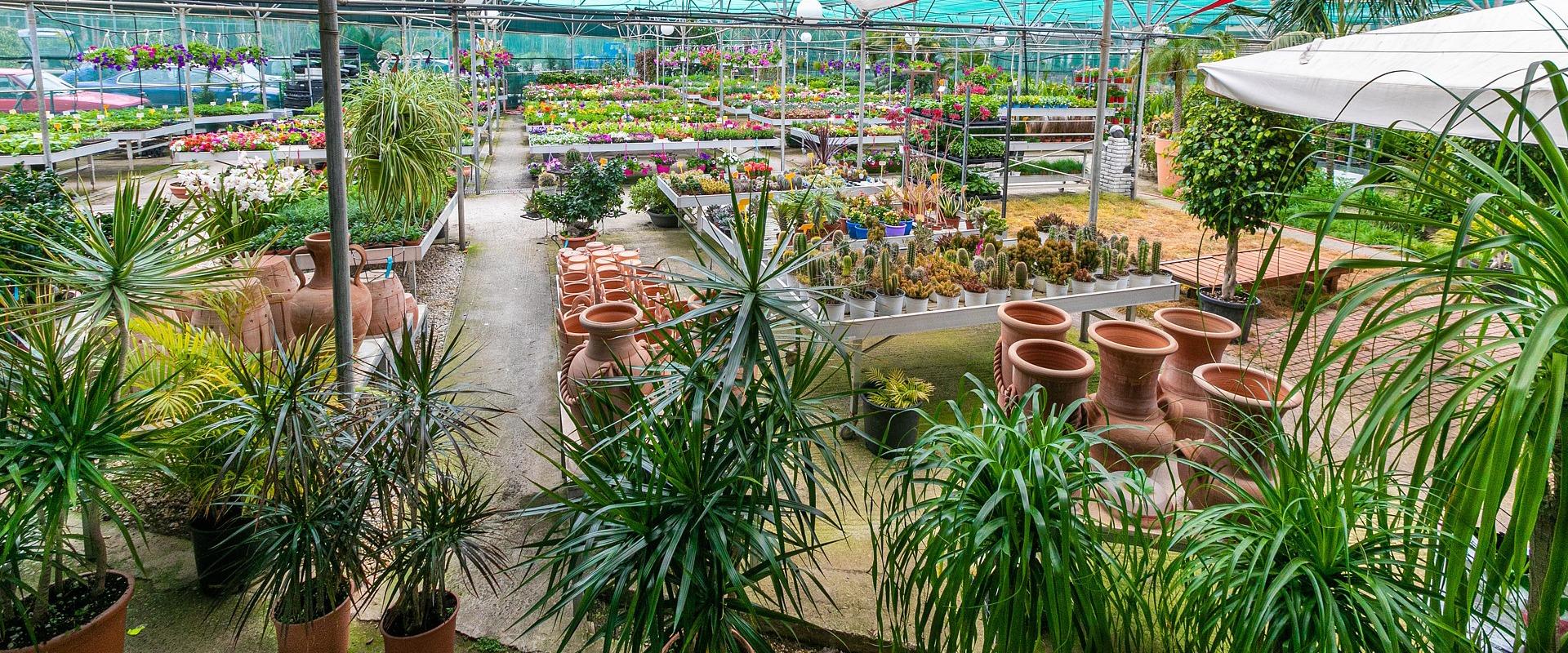 variety of plants garden center Chania, Crete