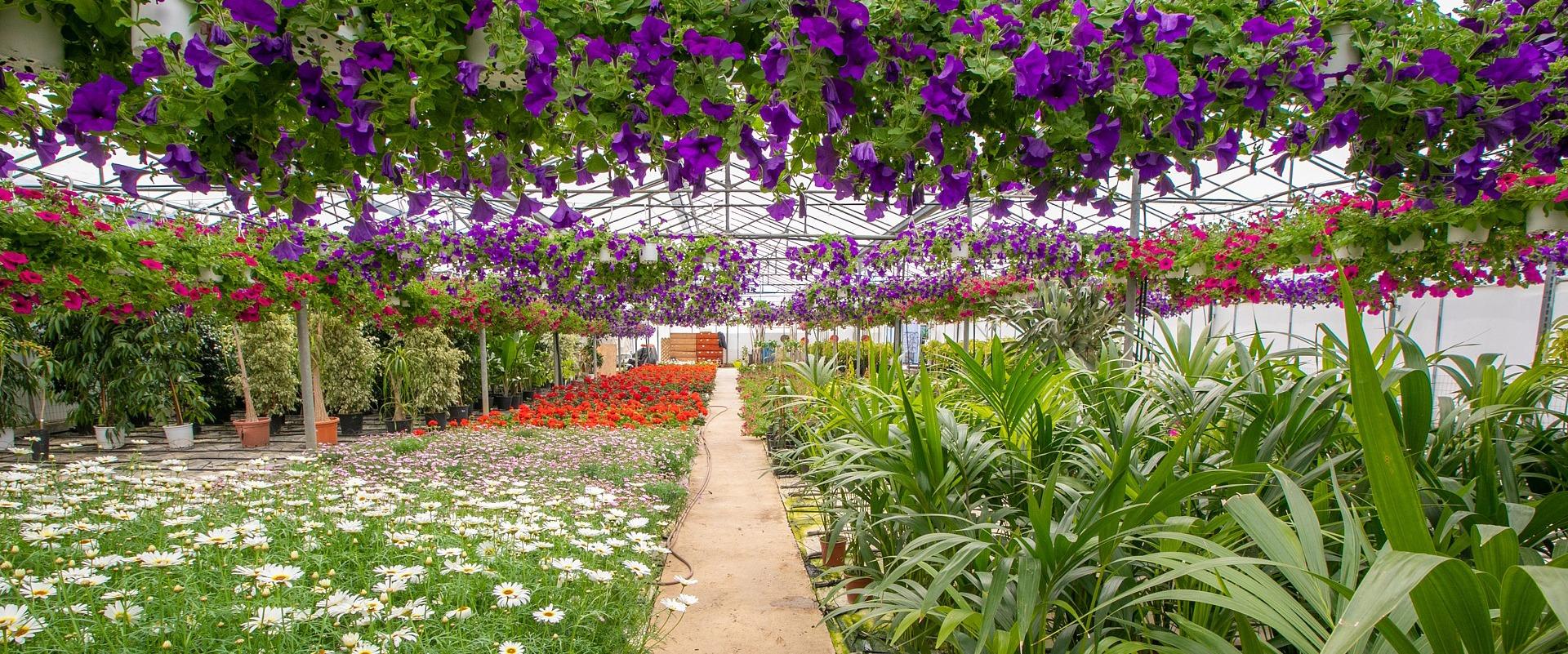 garden center beauty Chania, Crete