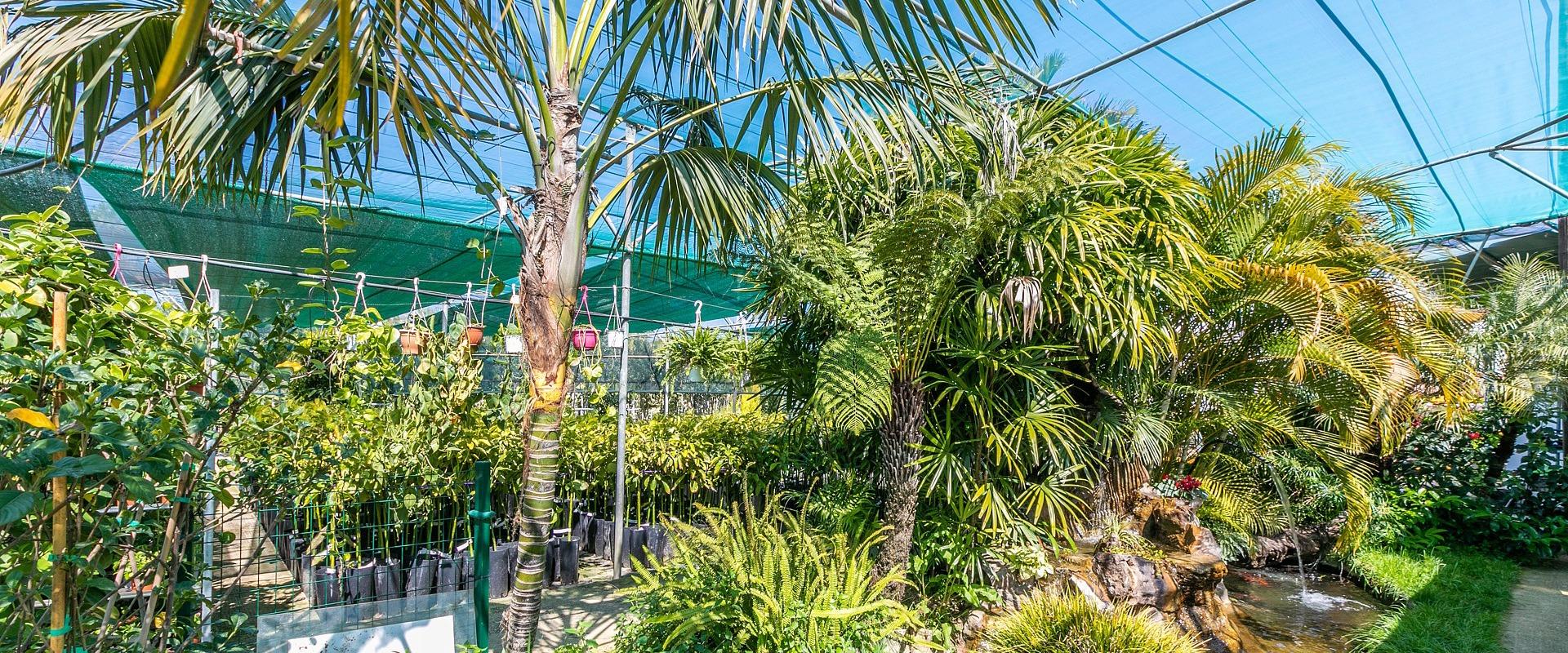 palm tree garden center Crete